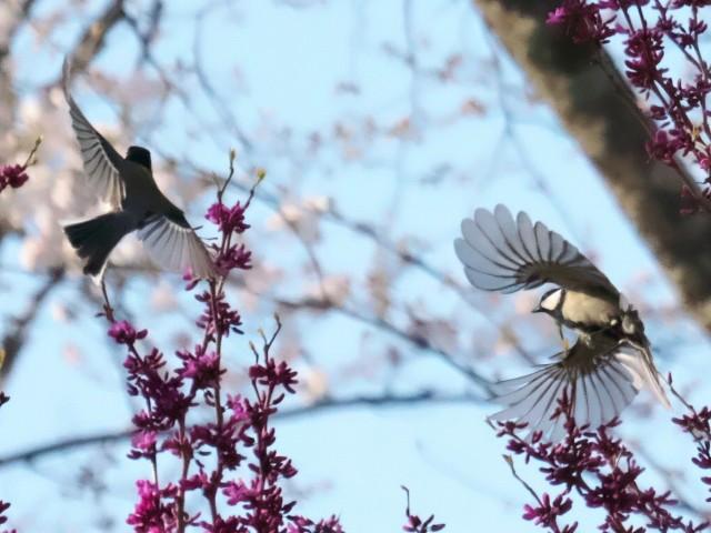 birds-photo3