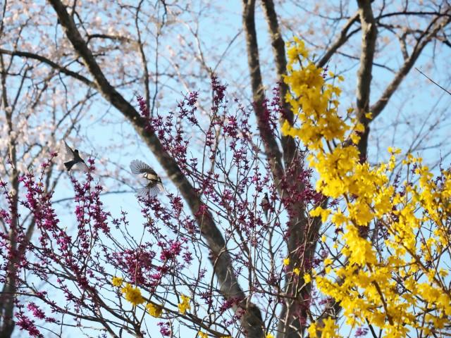 birds-photo1