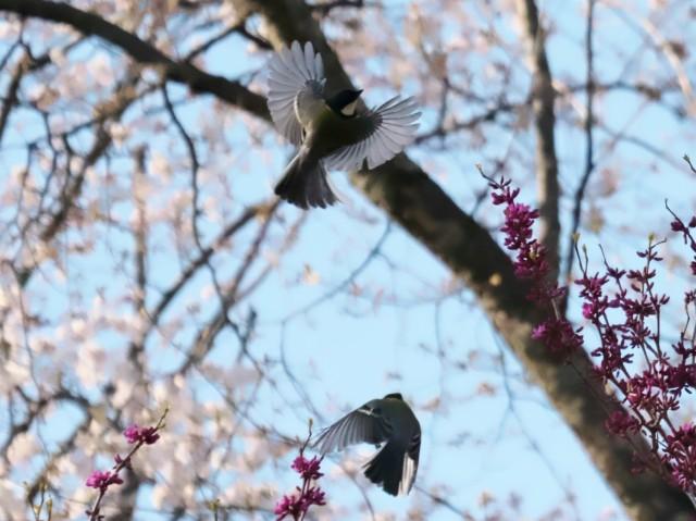 birds-photo6