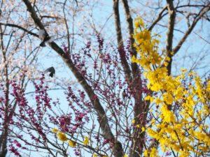 birds-photo4