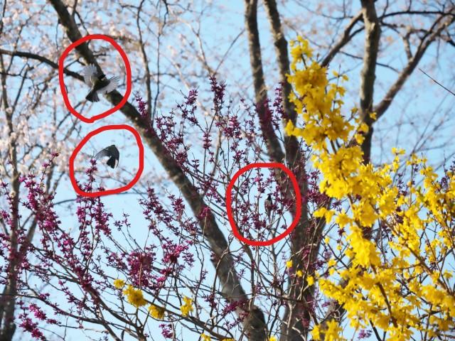 birds-photo5