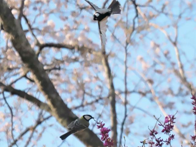 birds-photo8