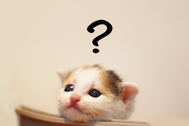 子猫がはてな?
