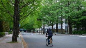 仙台市内の新緑風景